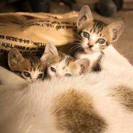 Big Mother by Liên Đại - Animals - Cats Kittens ( cat, mother, fat, big, small, kitty, cub )