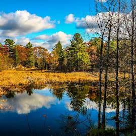by Vanko Dimitrov - Nature Up Close Trees & Bushes ( native, lakes )