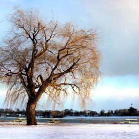 Riverside picnic by Jarrod Kudzia - Landscapes Weather ( michigan, winter, tree, ice, snow, trees, detroit, river )
