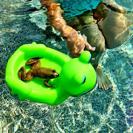 Froggy going for a raft ride. by Wendy Schultz - Animals Amphibians