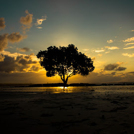 Sunset by Doddy Tanoni - Landscapes Beaches ( beaches, tree )