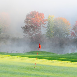 Foggy morn by Lawrence Kelly - Sports & Fitness Golf ( golf course, flag, fog, green, golf, geese,  )