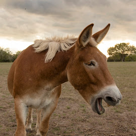 Apparently I said something funny by Kelley Hurwitz Ahr - Animals Other ( texas, churches, october 2014 )