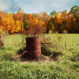 At the Farm by Dawn Gillon-Crowder - Landscapes Prairies, Meadows & Fields ( farm, field, tree, autumn, fall, trees, october, leaves, country, fields, color, colorful, nature )