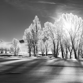 Morning Shadows in Winter B&W by Nico DeBarmore - Landscapes Prairies, Meadows & Fields ( cottonwoods, sunrise, morning, shadows, grand teton national park, Earth, Light, Landscapes, Views )