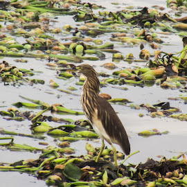 Bird by Sristi Yadav - Novices Only Wildlife ( water, bird, wings, sea, feathers )