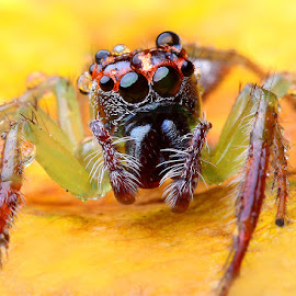 nguning by Indra Prihantoro - Animals Insects & Spiders