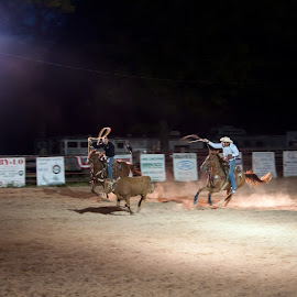 Team Roping by Rhonda Leach - Sports & Fitness Rodeo/Bull Riding