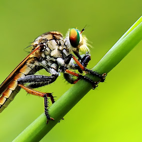by Didik Baen - Animals Insects & Spiders