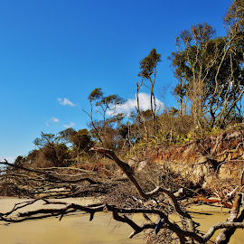 Driftwood by Lisa Montcalm - Landscapes Beaches