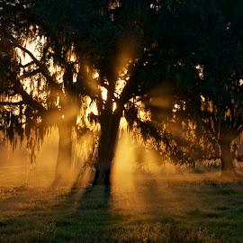 by Frazier Springfield - Landscapes Sunsets & Sunrises