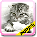 Purring Tiger kitten LWP icon