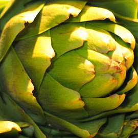Artichoke  by Jennifer Wheatley-Wolf - Food & Drink Fruits & Vegetables ( jennifer wheatley-wolf, artichoke, green, vegetable, veggie )