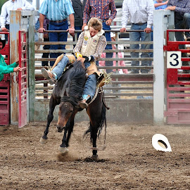 I may have lost my hat, however I still have my nerve.  by Dennis McClintock - Sports & Fitness Rodeo/Bull Riding ( horseback, bucking horse, sports, rodeo )