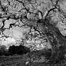Reality in my mirror by Peter Samuelsson - Digital Art Things