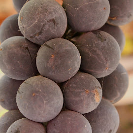 big grapes  by Chelsy Leaton - Nature Up Close Gardens & Produce ( vines, grapes, food, garden, photography )