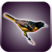 APK App Birds Sounds and Wallpapers for iOS