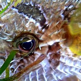 by Razone Wane - Animals Fish