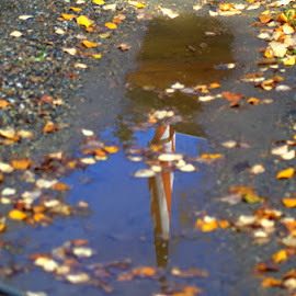 reflected Glory by Rebecca Weatherford - Novices Only Objects & Still Life ( water, reflection, flag, red, fall colors, blue, white, gravel, leaves, nikon )