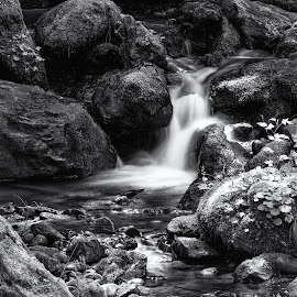 Waterfall by Jayme Spoolstra - Landscapes Forests ( olympic, stream, monochrome, waterfall, moss, stone, northwest, north, leaves, washington, creek, rocks, black, rain, water, pnw, park, brook, national, green, white, pacific, forest, woods, rainforest, fall, wa, west, river )
