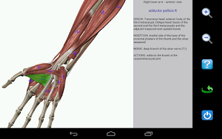 Screenshot of Visual Anatomy