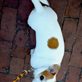 Spot by Rob Kovacs - Novices Only Pets