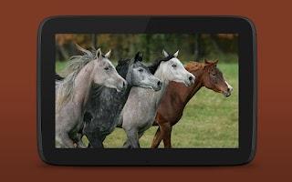 Screenshot of iKnow Horses 2 LITE