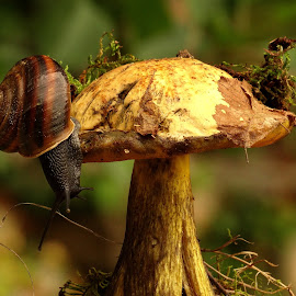 by Eva Doe (Antonija Kodžoman) - Nature Up Close Mushrooms & Fungi