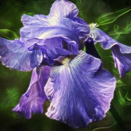 Enchanted Iris by Millieanne Tal - Digital Art Abstract