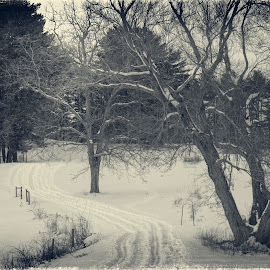 Winter at Appleton Farm by David Stone - Landscapes Prairies, Meadows & Fields ( appleton farm, winter, tree, ipswich, snow, tracks in snow )
