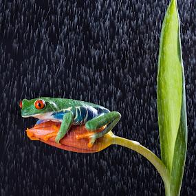 In Rain by Kutub Macro-man - Animals Reptiles ( macro, nature, flower arrangements, flowers, reptile, close-up, animal )