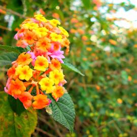 Superb Flowers by Vinayak Shinde - Novices Only Flowers & Plants ( vin007, plants, flowers, bokeh, flower,  )