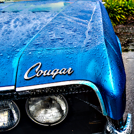 Cougar by Jeanne Knoch - Transportation Automobiles (  )