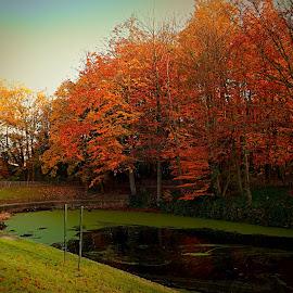 Park at Brussels by Meglena Georgieva - City,  Street & Park  City Parks ( nature, park, autumn, lake, walk, brussels, city )