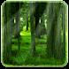 RealDepth Forest LWP