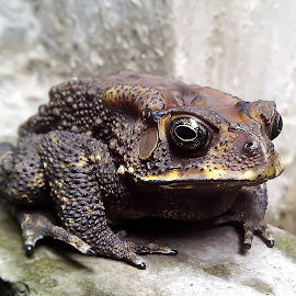 handsome toad by Hendrata Yoga Surya - Instagram & Mobile Android ( toad, kodok )