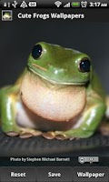 Screenshot of Cute Frog Wallpapers