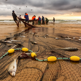 teamwork by António Leão de Sousa - People Professional People ( canon, water, beaches, fishermen, arte xávega, fishing nets, costa de caparica, seascapes, fish, sea, fishing, waterscapes )