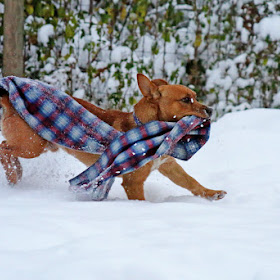 luther in the snow 062.JPG