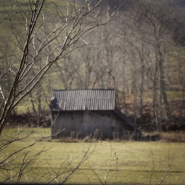 Barn in Corn Valley ! by Linda Blevins - Buildings & Architecture Other Exteriors ( old, tree, barn, grass, beautiful, creek,  )