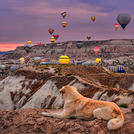 Beautifull Kapadokya by Indrawaty Arifin - Transportation Other ( hills, baloon, doggy, transportation, morning, air, transport,  )