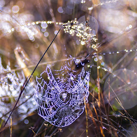 by Ilies Gabriela - Nature Up Close Webs