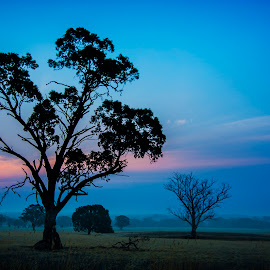 Tree in a Field by William Greenfield - Landscapes Prairies, Meadows & Fields ( sky, tree, blue, sunset, silhouette, australia, cloud, victoria, landscape )
