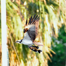 Dinner by Bill Telkamp - Novices Only Wildlife ( wildlife, birds )