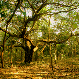 inside the forest by Anindya Karmakar - Landscapes Forests ( tree, green, forest, sunlight )