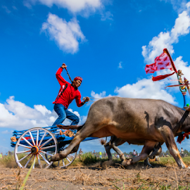 Bullrace by Gus Mang Ming - News & Events World Events