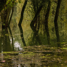 Submerged by Bojan Bilas - Nature Up Close Trees & Bushes ( water, flood, nature up close, treee, city park,  )