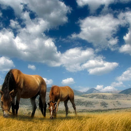 Horses in the meadow by George Petridis - Animals Horses ( clouds, mountains, sky, grazing, horses, grass, horse, meadow, sunshine, landscape )