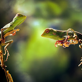 nongkrong bareng by Irfan Hikmawan - Animals Reptiles ( macro, animals, nature, macro photography, wildlife, reptile )