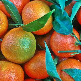 At the market by Dobrin Anca - Food & Drink Fruits & Vegetables ( orange, fruit, market, brittany, walk )